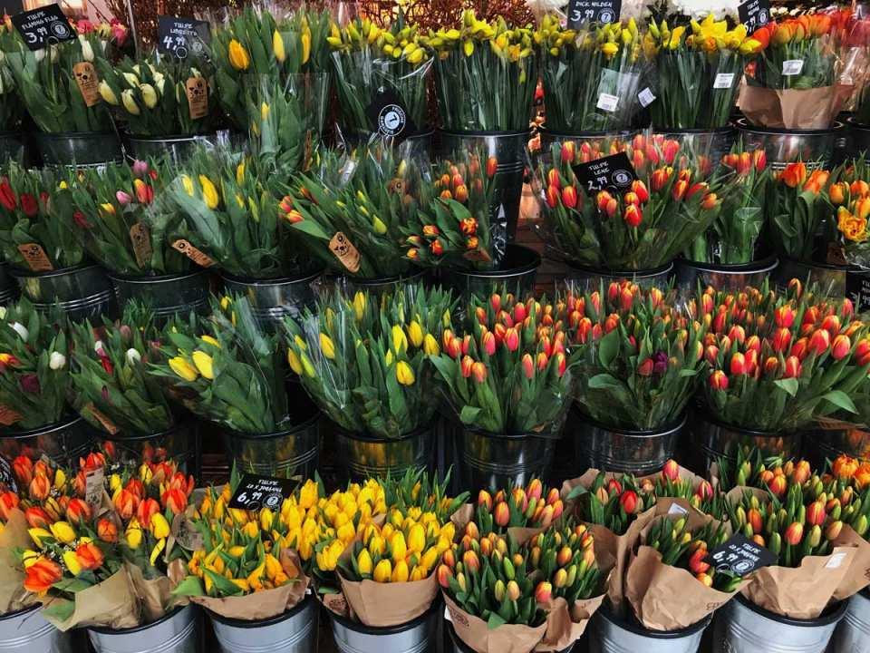 Tausend und eine Tulpe gibt es in Holland und bei Blume2000.