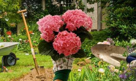 Jetzt im Frühling kann Marianne endlich wieder ihrer Leidenschaft nachgehen: dem Gärtern.