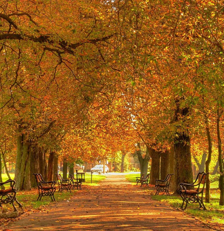 Wenn die Blätter in bunten Farben leuchten, heißt es: Raus ins Freie!